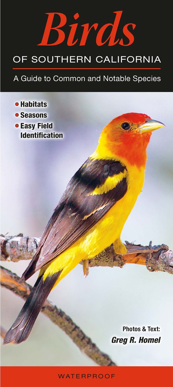 Birds of Southern California: A Guide to Common & Notable Species