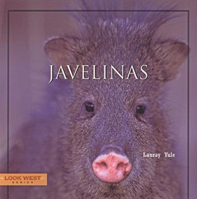 Look West: Javelinas