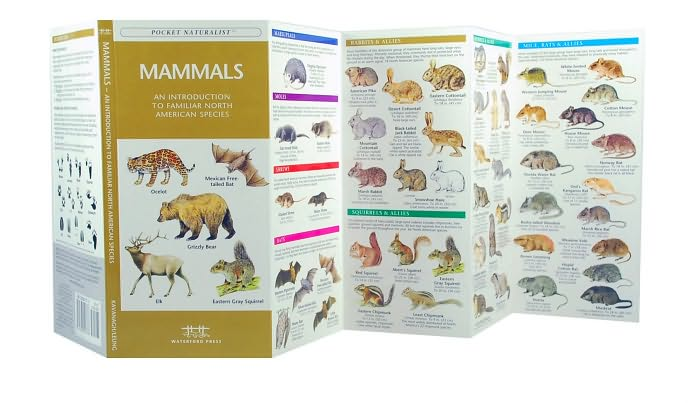 Pocket Naturalist Guide: Mammals